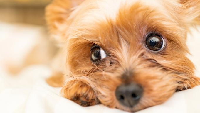 【いつでもいっしょ】ペットと宿泊プラン<無料朝食付き> アメニティバー&全室トゥルースリーパー導入