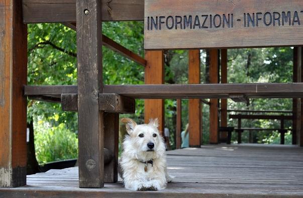 【お盆期間】ペット同伴限定 築浅ヴィラを貸切♪ 【大人6名迄(小学生以下無料)】愛犬と別荘ライフ♪