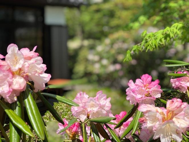 森泊と春の訪れ