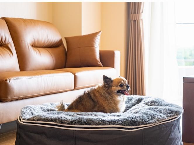 ドッグ専用ルーム・ドッグ用ベッド
