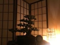 室内装飾 盆栽