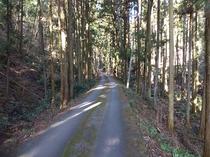 杉木立の道