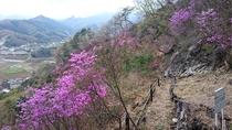 神成山ハイキング