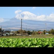天気が良ければ富士山が真正面
