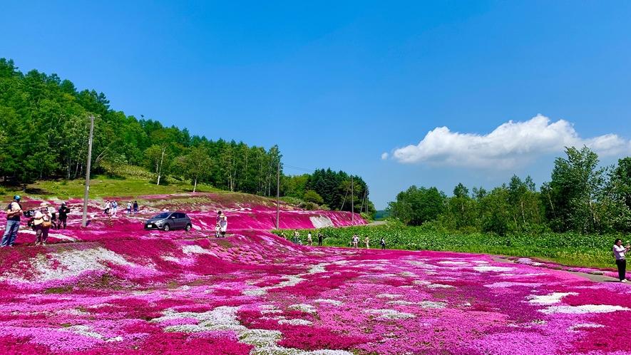 三島邸の芝桜