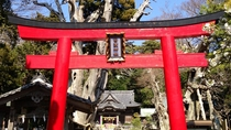 伊豆最古の神社は宿の目の前!運が良ければ夜には白浜太鼓の練習が聞けます。