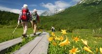 [栂池自然園]春から秋にかけて約340種のお花が咲き乱れる高山植物の宝庫