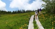 [栂池自然園]雄大な白馬の山並みを眺めながら約3時間半のトレッキング