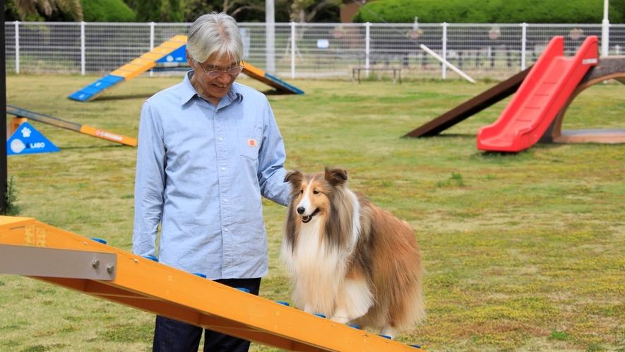 ドッグラン 初心犬にはハードルが高いかもしれませんが、成功すれば盛り上がること間違いなし!