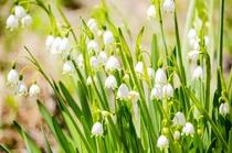 敷地内で咲く野草