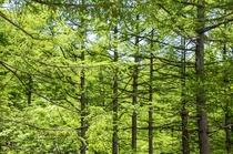 敷地を囲む斑尾高原の森