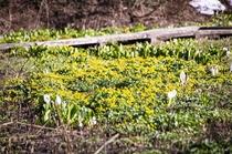 沼の原湿原