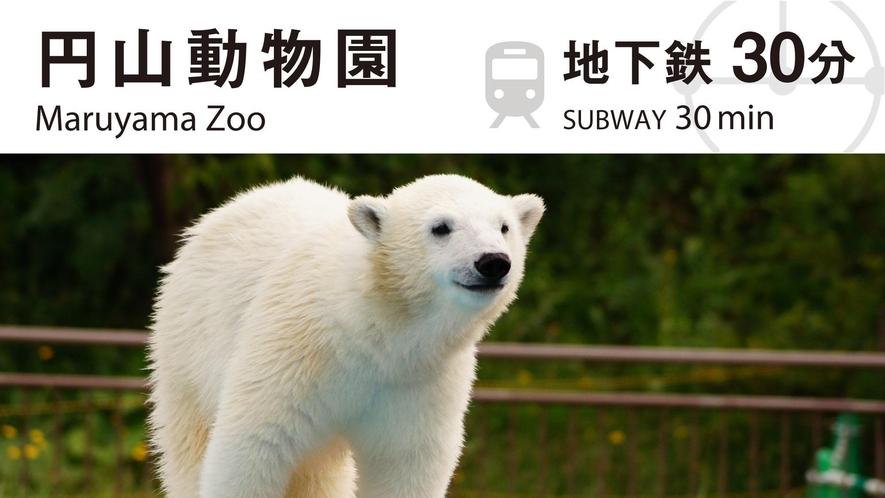 ■周辺観光/「円山動物園」まで、公共交通利用で約30分