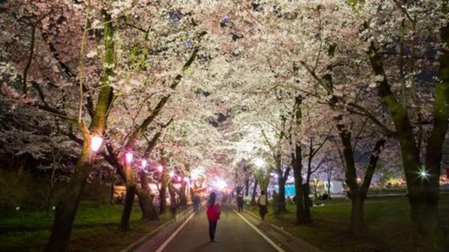 ■赤城南面千本桜(写真提供:前橋観光協会)