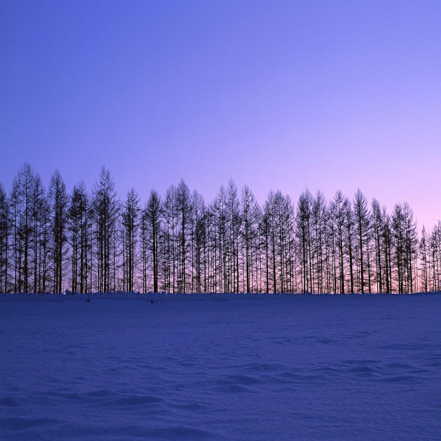 初冬の美瑛の丘
