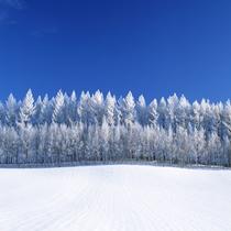 厳冬の美瑛の丘