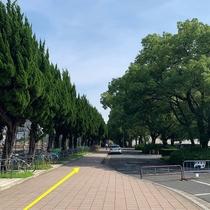 駅からの案内⑤線路を左手にしながら進み、遊歩道をつきあたりまで進みます。