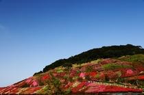 不老山総合公園