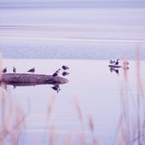 洞爺湖の自然