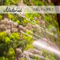 【Natural】館内に休眠状態の呼吸するコケ!きれいな空気!