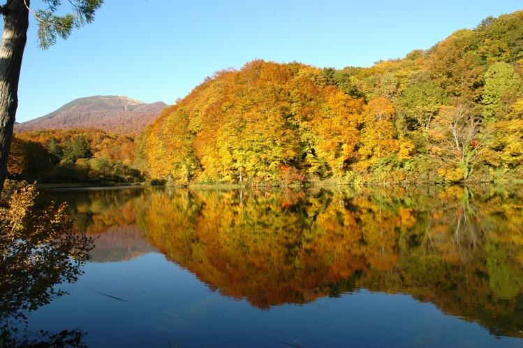 【秋】五色沼の紅葉