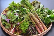 春の山菜いろいろ