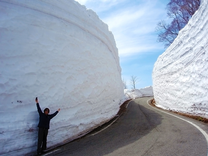 【春】雪の回廊