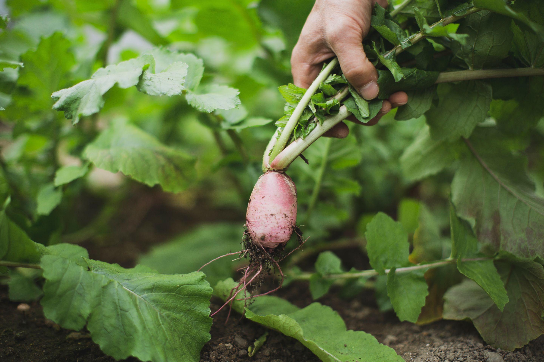 農園体験 〜野菜収穫から始まる 松永六感の食事〜