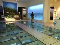沖縄県立博物館・美術館(車で約25分)