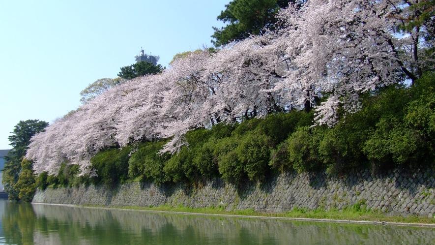 桜(駿府城跡 中濠)