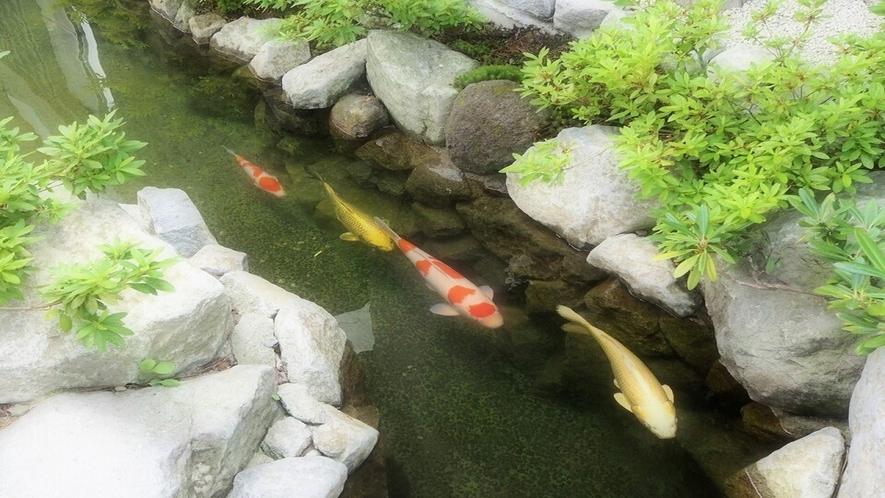 ★【外観】池の鯉