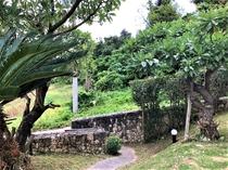 庭の様子1
