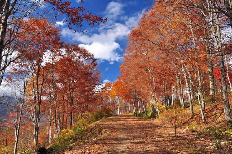 秋の白馬 周辺散策