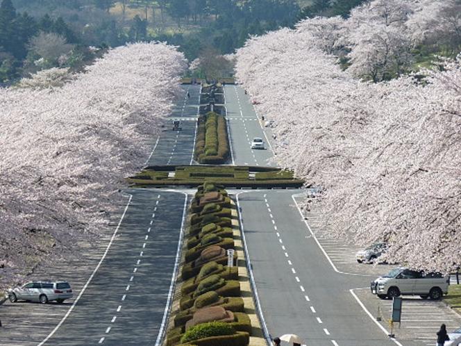 桜が美しい富士霊園