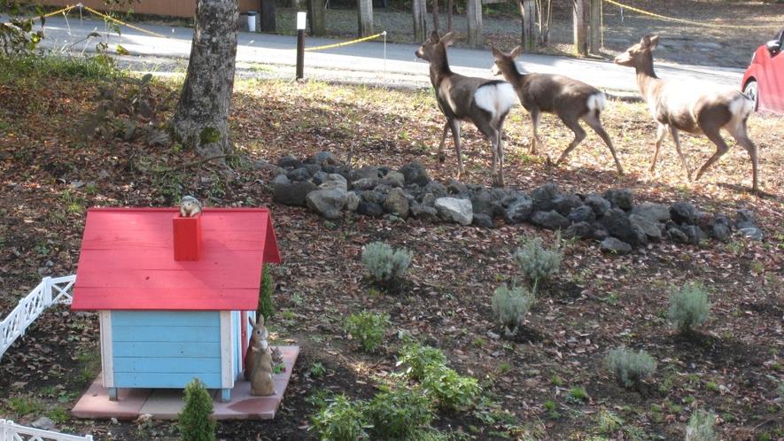 庭を行進中の鹿♪