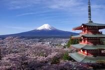 桜が美しい新倉山浅間公園