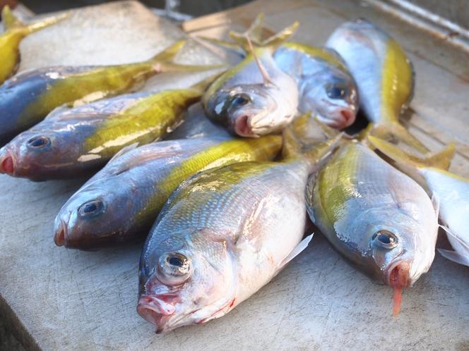 瀬戸内近海で捕れる魚たち