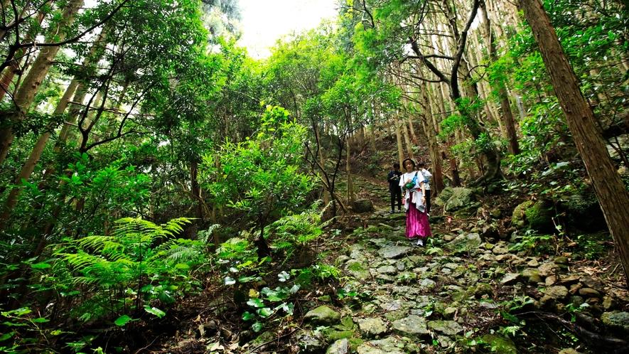 *【南紀熊野ジオパーク散策】新田平見では静寂に包まれた古道を歩くことができます