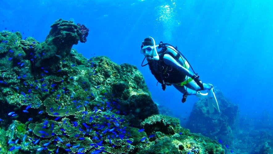 *【ダイビング】体験ダイビングや少し場所を移動すればボートダイビングも可能