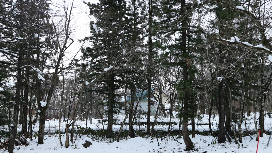 *【当館周辺】当館は、閑静な広葉樹に囲まれたみそら野の別荘地にございます
