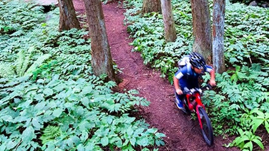 *【マウンテンバイク】Hakuba47と岩岳には、初級者から楽しめるコースが用意されています。