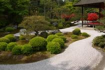 【京都の庭園】曼殊院