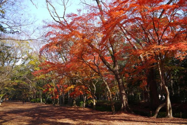 ◆下鴨神社◆糺の森