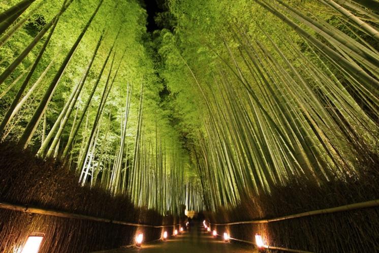 【夜の京都】竹林の道_嵐山花灯路