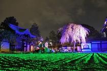 【夜の京都】高台寺_ライトアップ