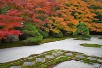 【京都の庭園】南禅寺 天授庵