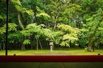 【京都の庭園】大徳寺 高桐院