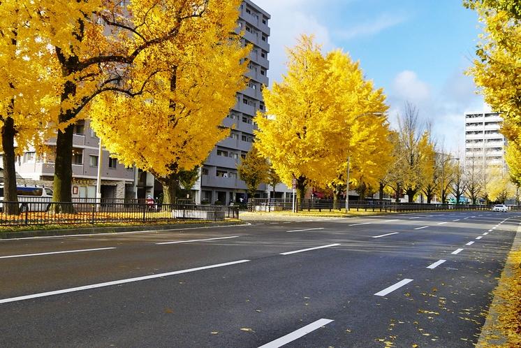 ◆堀川通◆イチョウ並木