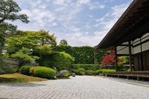【京都の庭園】大徳寺 興臨院