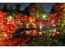 ◆観光◆永観堂・夜(紅葉)